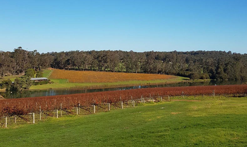 Margaret River grape vines